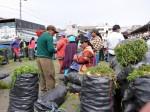 Groentenmarkt van Saquisili