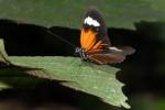 Een van de zovele mooie vlinders hier