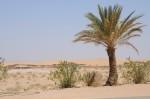 De eerste zandduinen