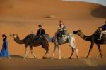Dames op stap met kamelen -- of omgekeerd?