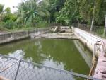 Krokodillenkwekerij in het hol van pluto