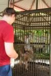 Apen in een kooi. Dat ze daar bij ons nog niet op gekomen zijn